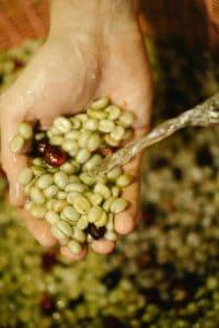 Grünen Grüner Kaffee kaufen - Rohbohnen Rohkaffee